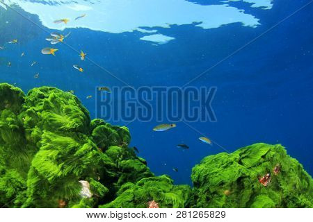 Green Algae, fish and blue water