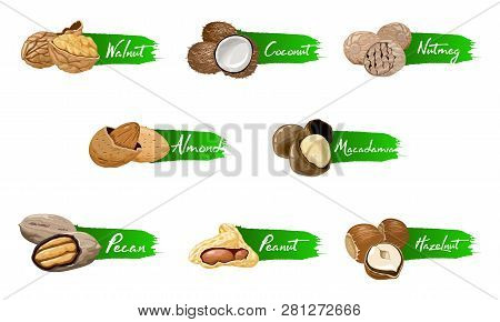 Set Of Named Vector Icons Nuts And Seeds. Nuts Logo Set. Vector Labels With Walnut, Coconut, Nutmeg,