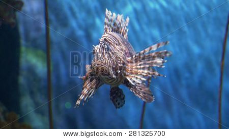 Underwater World, Many Colorful Fish, Coral Reefs. Lionfish