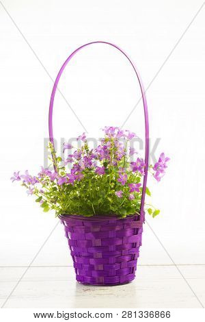 Small Magenta Flowers In The Basket Isolated.