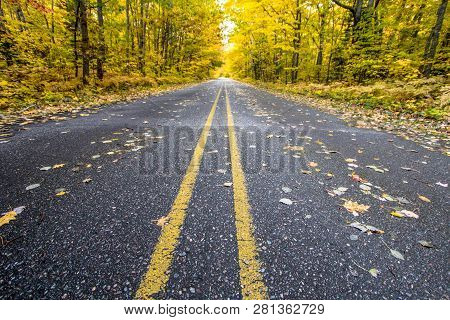 Michigan Fall Color Tour. Wide Open Rural Road Through An Autumn Forest Ablaze With Fall Color.