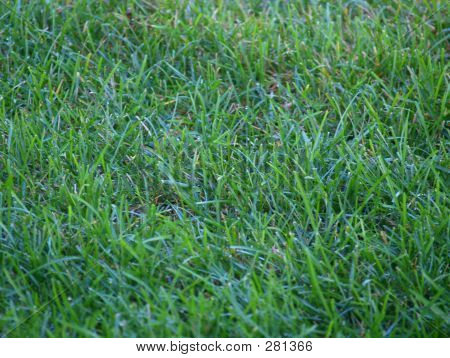 The Green, Green Grass Of Home