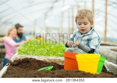 Summer Gardening. Small Boy Gardening In Summer. Summer Gardening Concept. Summer Gardening Of Famil