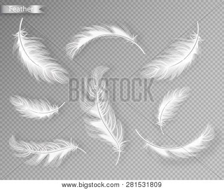 White Feathers Set Collection Vector Realistic. Different Falling Twirled Feathers Isolated On Trans
