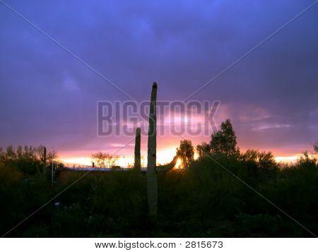 Cactus Sunrise