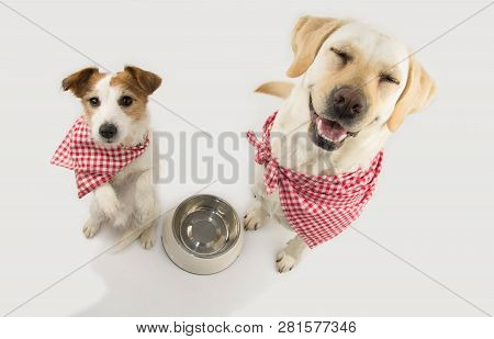Two Dogs Begging Food. Labrador And Jack Russell Waiting For Eat With A Empty Bowl. Closed Eyes Stan