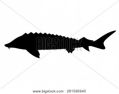 Black Silhouette Of Sturgeon. Fish Logo Icon. Vector Illustration Isolated On White, Side View.