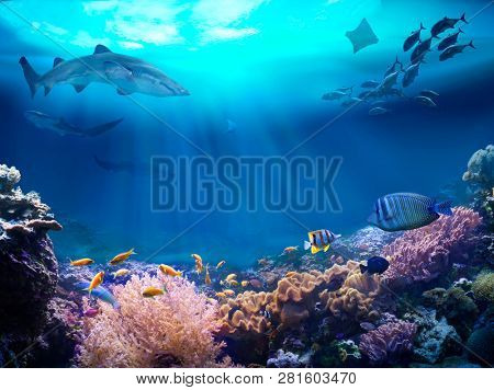 Underwater view of the coral reef. Life in the ocean.