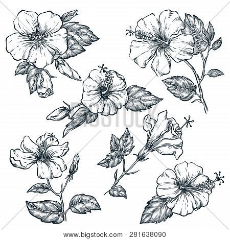 Tropical Flowers Set, Vector Sketch Illustration. Hand Drawn Tropic Nature And Floral Design Element