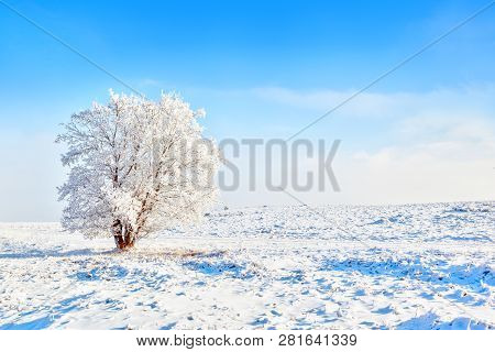 Lonely Snow-covered Tree In Harsh Winter Landscape In Alberta, Canada, With Blue Sky And Copy Space.
