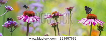 The Panoramic View - Garden Flowers And Butterfly And Bumblebees Close Up