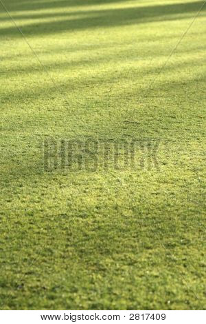 Grass Lawn Background With Evening Shadows
