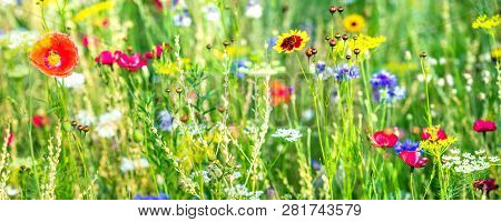 Variety Of Wildflowers And Native Herbs, Wildflower Meadow At The Heyday, Panorama