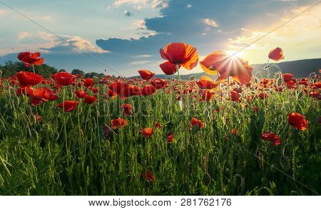 Red Poppy Flowers In The Field. Beautiful Springtime Scenery At Sunset In Mountains. Lovely Nature B