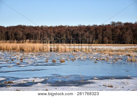 Winter Season A Cloudless Day In An Icy Marsland With Dried Reeds