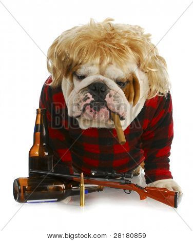 redneck dog - english bulldog redneck smoking cigar and sitting beside gun and beer bottles