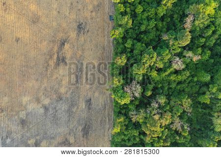 Deforestation. Logging. Environmental problem