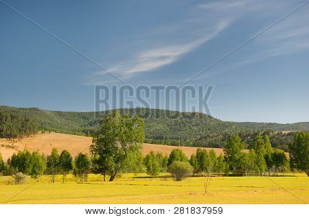 Field With Trees Against A Blue Sky