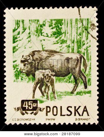 POLAND - CIRCA 1960: A stamp printed in Poland shows Wild Bisons, series, circa 1960