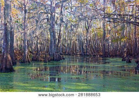 Mossy Swamplands With Mangrove Trees In Louisiana, Usa. Magical Mangrove Forest On A Sunny Afternoon