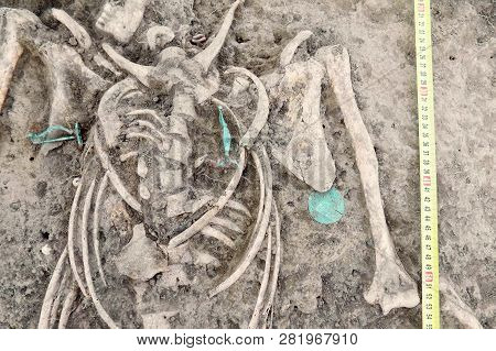 Archaeological Excavations. Human Remains (bones Of Skeleton, Skulls) In The Ground, With Artefacts