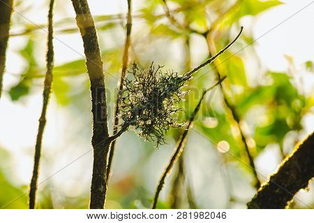 Lichen On The Branches Is A Mixture Of Two Organisms: Mold And Lichen
