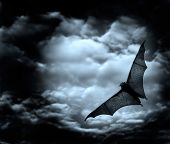 bat flying in the dark cloudy sky poster