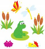 Vector clip-art illustration of a green frog, dragonfly, butterfly, fish, water lily and cane poster