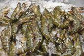 Fresh shrimps on ice in Philippine wet market poster