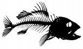 A Skeleton of big predatory sea fish. poster