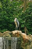 A crane in the rocky forest near the waterfalls poster