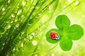 Funny picture of four leaf clover and ladybug. Great for greeting card. poster