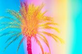 Feathery palm tree on sky background toned in vibrant saturated rainbow neon pastel colors. Surrealistic funky style. Tropical beach vacation wanderlust. Card poster flyer party invitation template poster