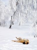 Joy dog playing in snow.