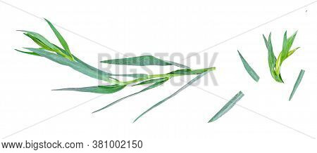 Tarragon Herbs Close Up Isolated On White   Background. Top View. Fresh Tarragon Leaves Flat Lay