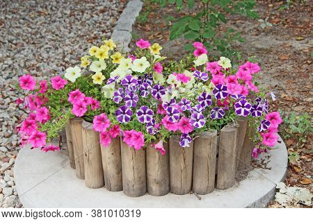 Different Flowers Of Petunia Blossoming In Bed Made From Wooden Boards. Landscape Design In City Par