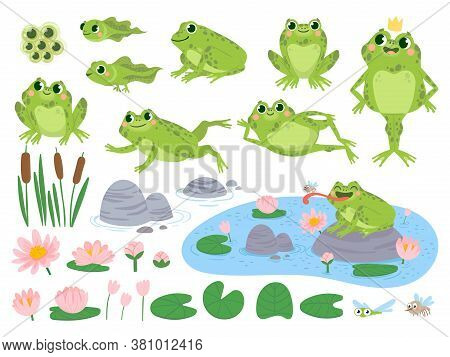 Cartoon Frogs. Green Cute Frog, Egg Masses, Tadpole And Froglet. Aquatic Plants Water Lily Leaf, Toa