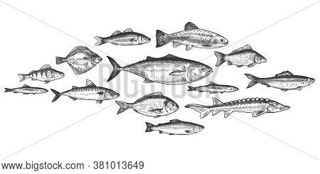 Fish School. Hand Drawn Fishes Shoal, Underwater Marine Ecosystem, Sea And River Inhabitants Vintage