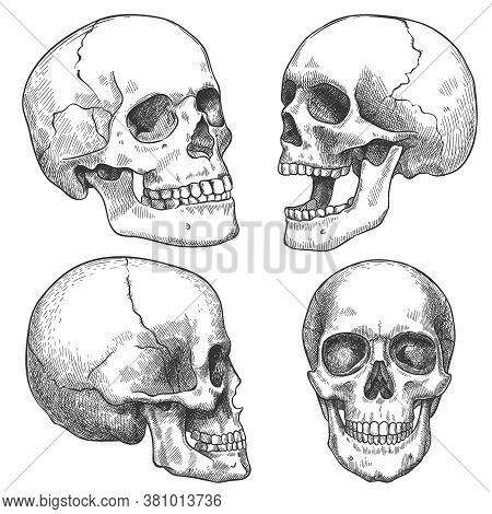Sketch Skull. Hand Drawn Anatomical Skulls In Different Projection, Monochrome Tattoo Artwork, Anato