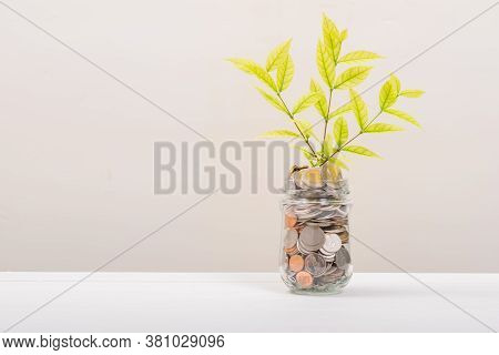 Many Money Coin In Jar Or Glass Bottle, Tree Leaf Inside In Stack Conin. Business Finance And Money