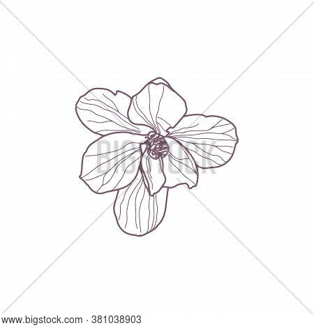 Hand Drawn Magnolia Flowers For Gritting Or Wedding Card
