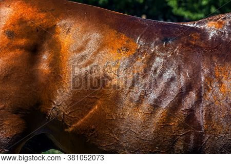 Skin Of A Thoroughbred Red Horse Close Up.