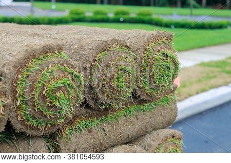 Gardener Installing Natural Grass Turf Installer Beautiful Rolled Sod Lawn Field.