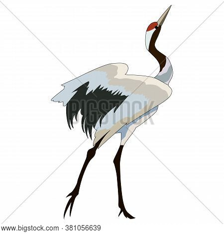 Drawing, Isolate On A White Background, Image Of Storks, Vector Illustration