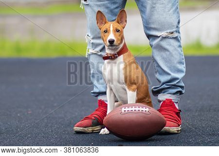 Legs Of Owner, Unrecognizable Person Playing With Funny Happy Dog With American Football Ball On The