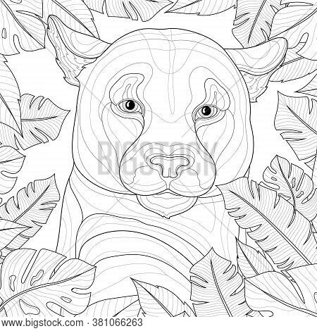 Puma Among Tropical Leaves. Animal.coloring Book Antistress For Children And Adults. Zen-tangle Styl