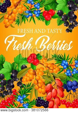 Berries, Farm Garden Raspberry, Strawberry And Blueberry Fruits, Vector Poster. Forest And Garden Be