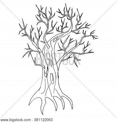 Handsketched Old Crooked Tree, Halloween. Dry Wood, Tinder. Deciduous Oaktree Vintage Ink Sketch. Fr