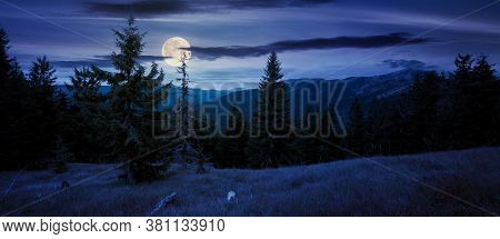 Spruce Forest On The Hillside Meadow At Night. Colorful Grass In Autumn. Hills Rolling In To The Dis