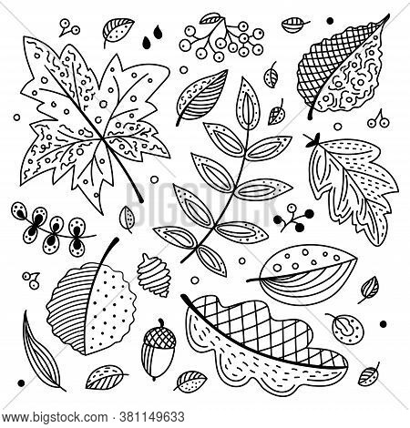 Autumn Vector Set With Leaves, Cones And Acorns. Decorative Leaves Of Oak, Maple, Mountain Ash, Aspe